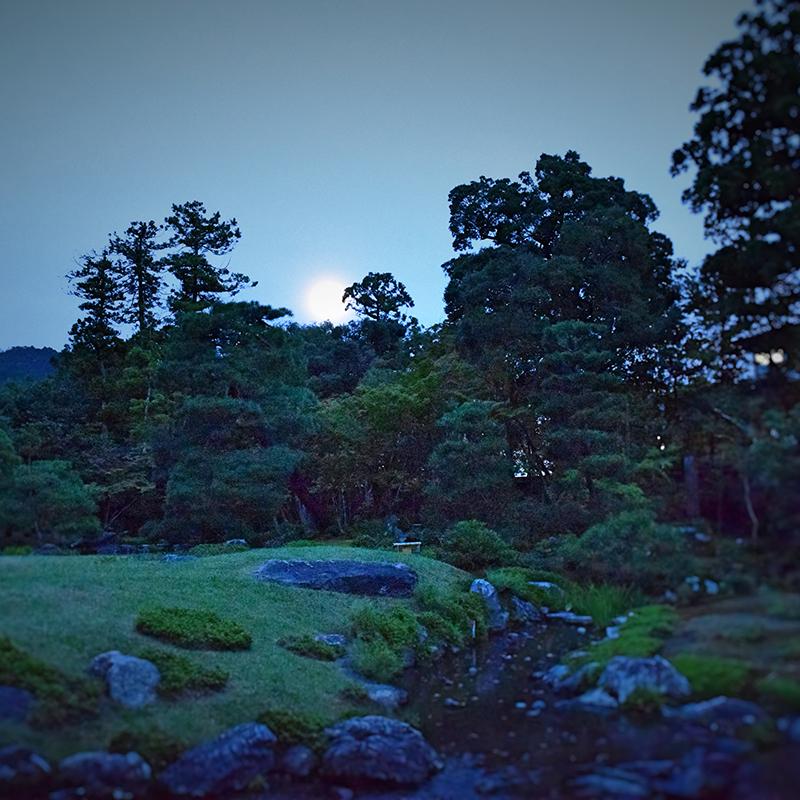 夜間ライトアップ庭園特別鑑賞プラン / Special Evening Rental
