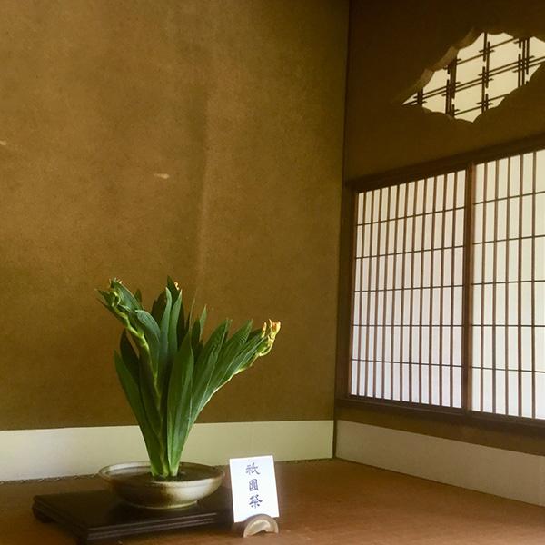 祇園祭の花「ヒオウギ(檜扇)」