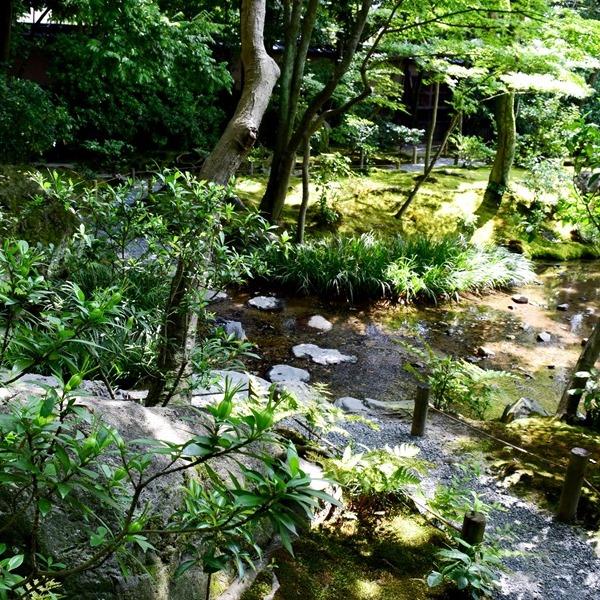 クチナシの青果実 三段の滝付近