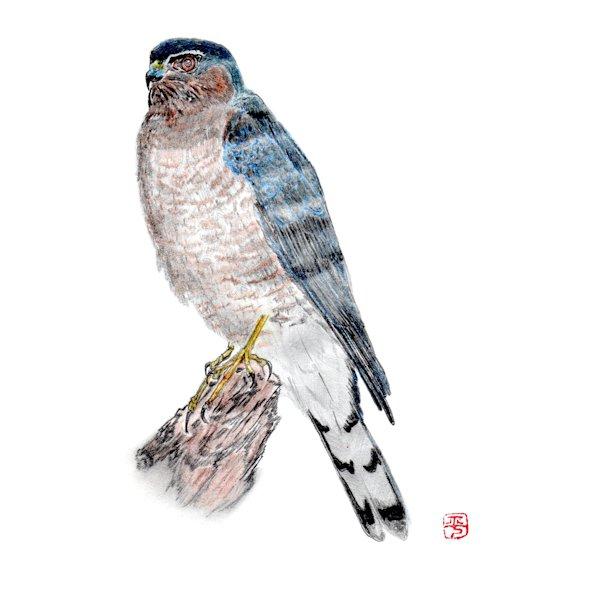 野鳥ミニ講座