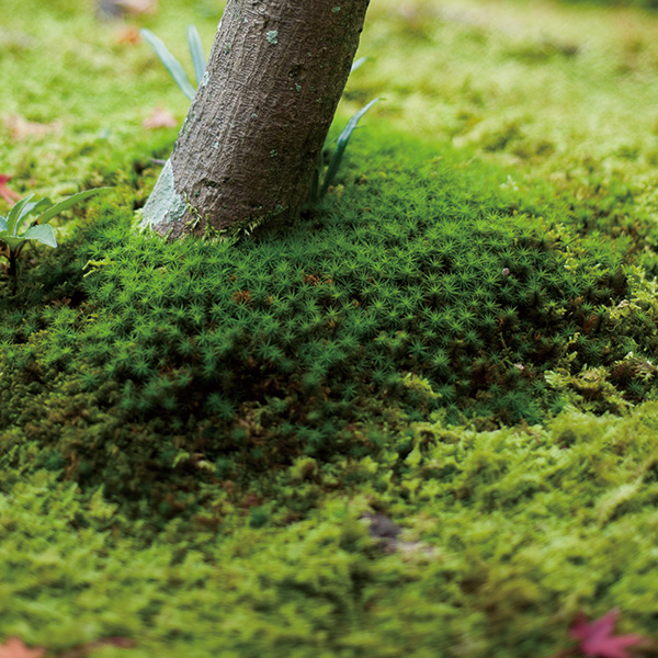 A Garden Woven Together by Time: The Beauty of Moss