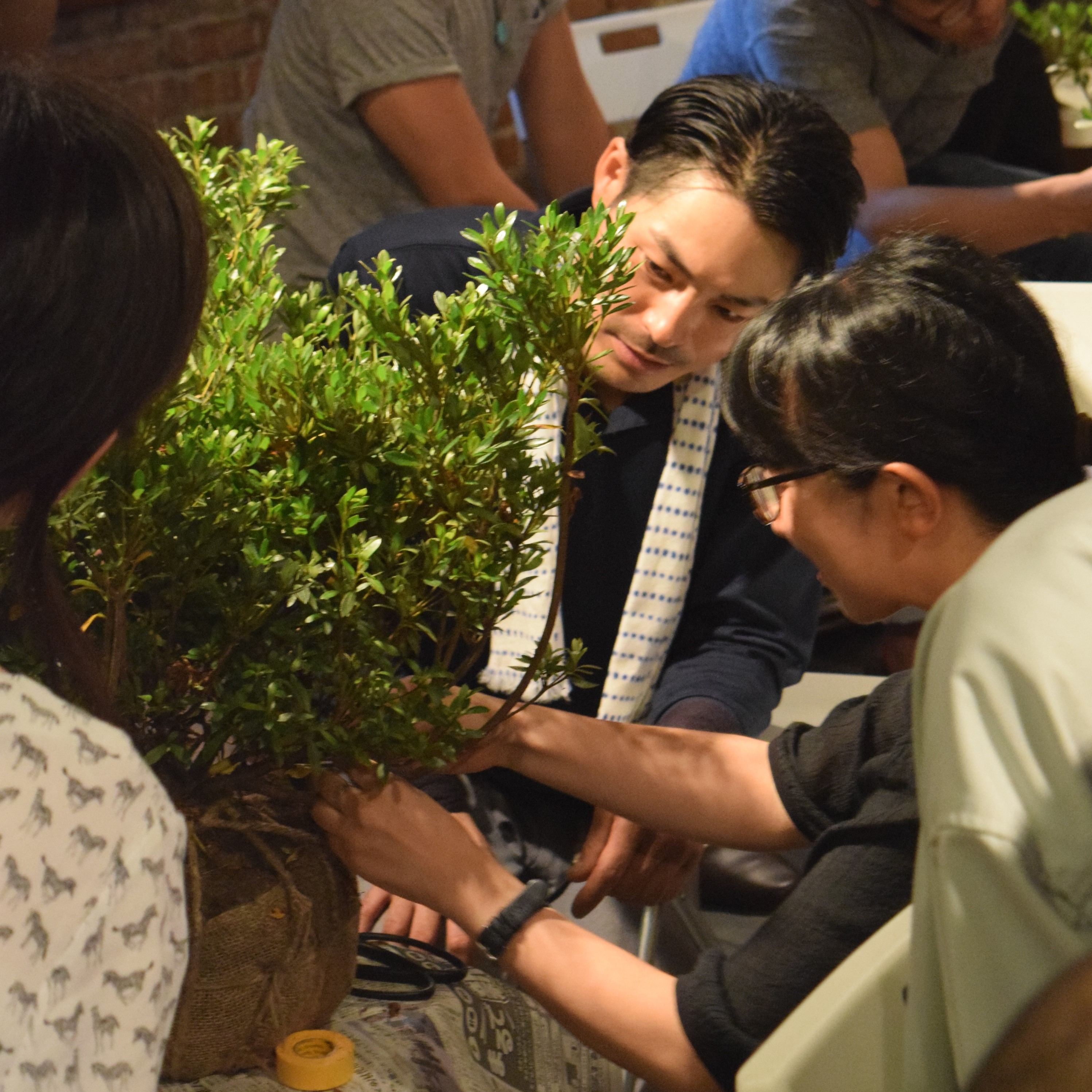 庭師と学ぶ フォスタリング・スタディーズ Ⅲ 第1回「春」サツキツツジ、アセビ、松の芽つみ