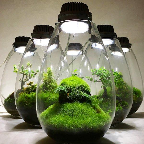 洋館特別展示「Mosslight – LED 苔の魅力にひたる」