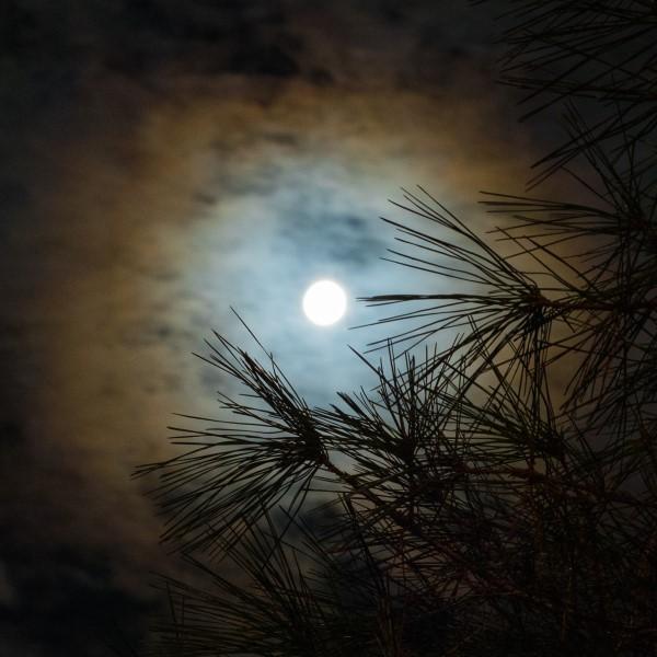 無鄰菴 for 庭ヤングジェネレーション 水面に映る月をめでる満月の夜