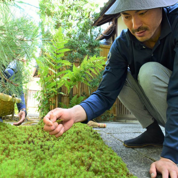庭師が苔を摘む