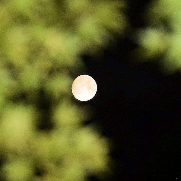 水面に映る月を愛でる満月の夜