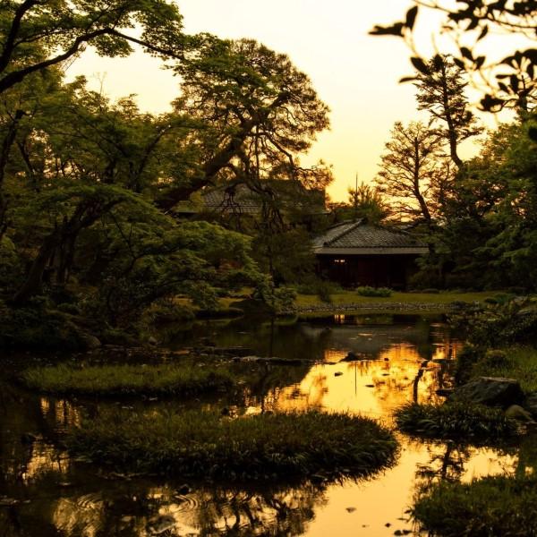 6/13蛍が舞い飛ぶ - トワイライト日本庭園の特別鑑賞