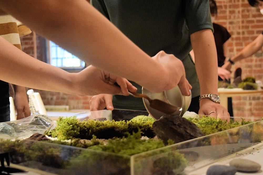 苔庭づくり 大学コンソーシアム京都